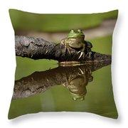 Reflecktafrog Throw Pillow