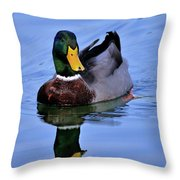 Reflecting Mallard Throw Pillow