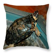 Reflecting Turtle Throw Pillow