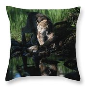 Reflection Of Lynx In Stream Idaho, Usa Throw Pillow
