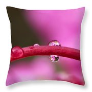 Reflections In Raindrops, Forbidden Throw Pillow by Robert Postma