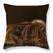 Reflexion D'un Hornet  Throw Pillow