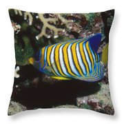 Regal Angelfish In Coral Reef Throw Pillow