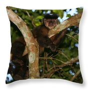 Relaxed - Brown Capuchin Throw Pillow