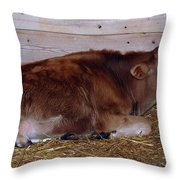 Resting Calf Throw Pillow