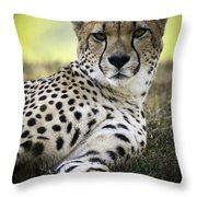 Resting Cheetah Throw Pillow