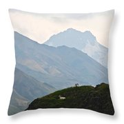 Resting Dall Sheep Throw Pillow