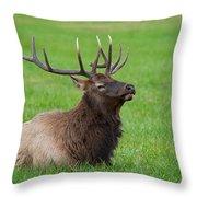 Resting Elk Throw Pillow