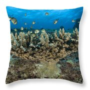 Reticulate Humbugs Gather Under Stone Throw Pillow