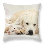 Retriever With Friendly Kittens Throw Pillow