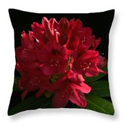 Rhododendron At Sunset 1 Throw Pillow