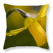 Rhododendrons, Close-up Throw Pillow