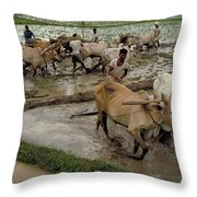 Rice Cultivation Throw Pillow