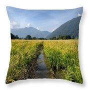 Rice Field Throw Pillow