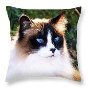 Rikki Blue Eyes Throw Pillow