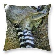 Ring-tailed Lemurs Madagascar Throw Pillow