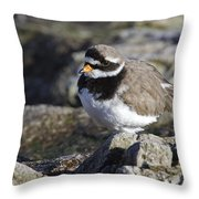 Ringed Plover Throw Pillow