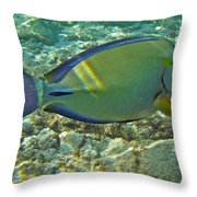 Ringtail Surgeonfish Throw Pillow by Michael Peychich