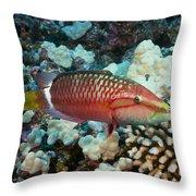 Ringtail Wrasse Throw Pillow