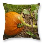 Ripe Pumpkin Throw Pillow