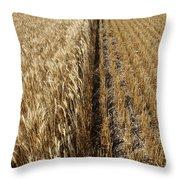 Ripened Wheat And Stubble In Saskatchewan Field Throw Pillow