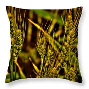 Ripening Wheat Throw Pillow