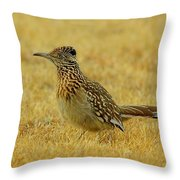 Roadrunner Hen Throw Pillow