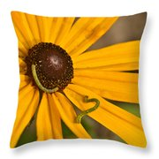 Roadside Daisy And Inch Worms Throw Pillow