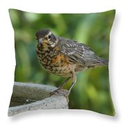 Robin Contemplating Getting In Throw Pillow