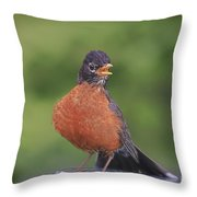 Robin In Distress Throw Pillow by Deborah Benoit
