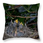 Robin Nestlings Throw Pillow by Ted Kinsman