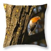 Robin On Tree Throw Pillow