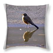 Robin Reflection Throw Pillow