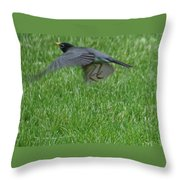 Robin With A Low Level Approach Throw Pillow