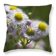 Robin's Plantain - Alabama Wildflowers Throw Pillow