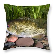 Rock Bass Throw Pillow