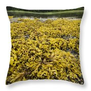 Rock Weed Fucus Gardneri At Low Tide Throw Pillow