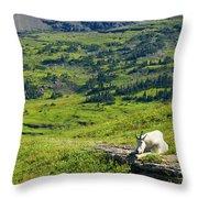Rocky Mountain Goat Glacier National Park Throw Pillow