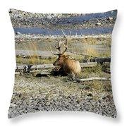 Rocky Mountains Elk Throw Pillow