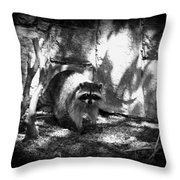 Rocky Raccoon Throw Pillow
