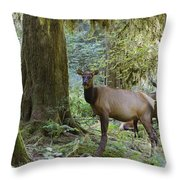 Roosevelt Elk Cervus Elaphus Throw Pillow