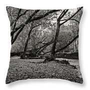 Rooted Within The Gravel Throw Pillow