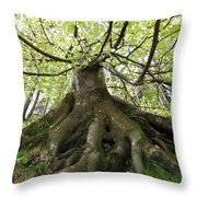 Roots Of An Old Beech Tree Throw Pillow