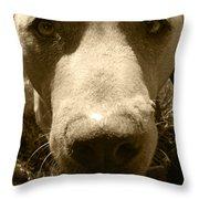 Roscoe Pitbull Eyes Throw Pillow