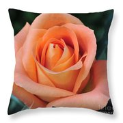 Rose 33 Throw Pillow