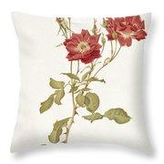 Rose Bourbon Throw Pillow