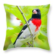 Rose-breasted Grosbeak Throw Pillow