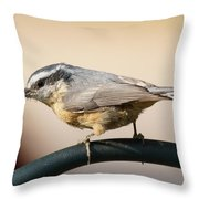 Rose Breasted Nuthatch Throw Pillow