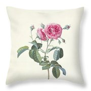 Rose Dutch Hundred Leaved Rose Throw Pillow