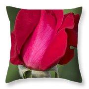 Rose Flower Series 1 Throw Pillow
